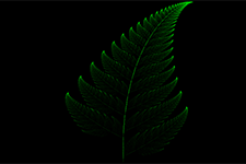 Fractal Fern New Colouring